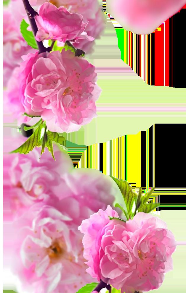 slider-02-flowers-05-2